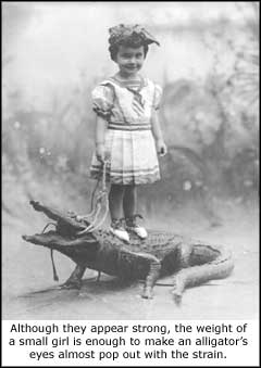 Alligator and girl