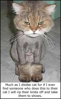 If you do this to your cat I shall pay you a visit and sell you as a limbless sexual slave for the freaks at the circus